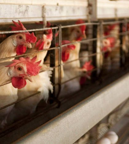 Bachoco acuerda la compra de la estadounidense Albertville Quality Foods