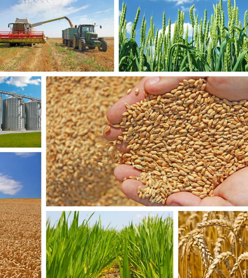 ¿Cómo está la reputación del sector alimentario?