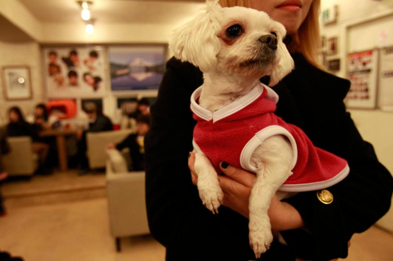 +KOTA ofrece alimento y asesoría gratuita para mascotas afectadas por sismo