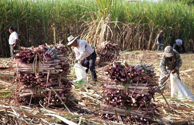 El Salvador destina 127.7 mdd para sector agricola