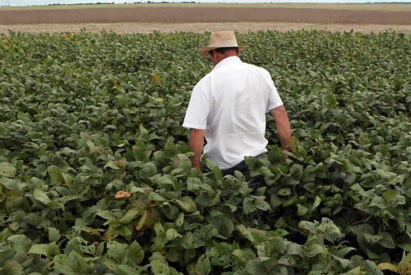 5 pasos para resolver la crisis alimentaria mundial