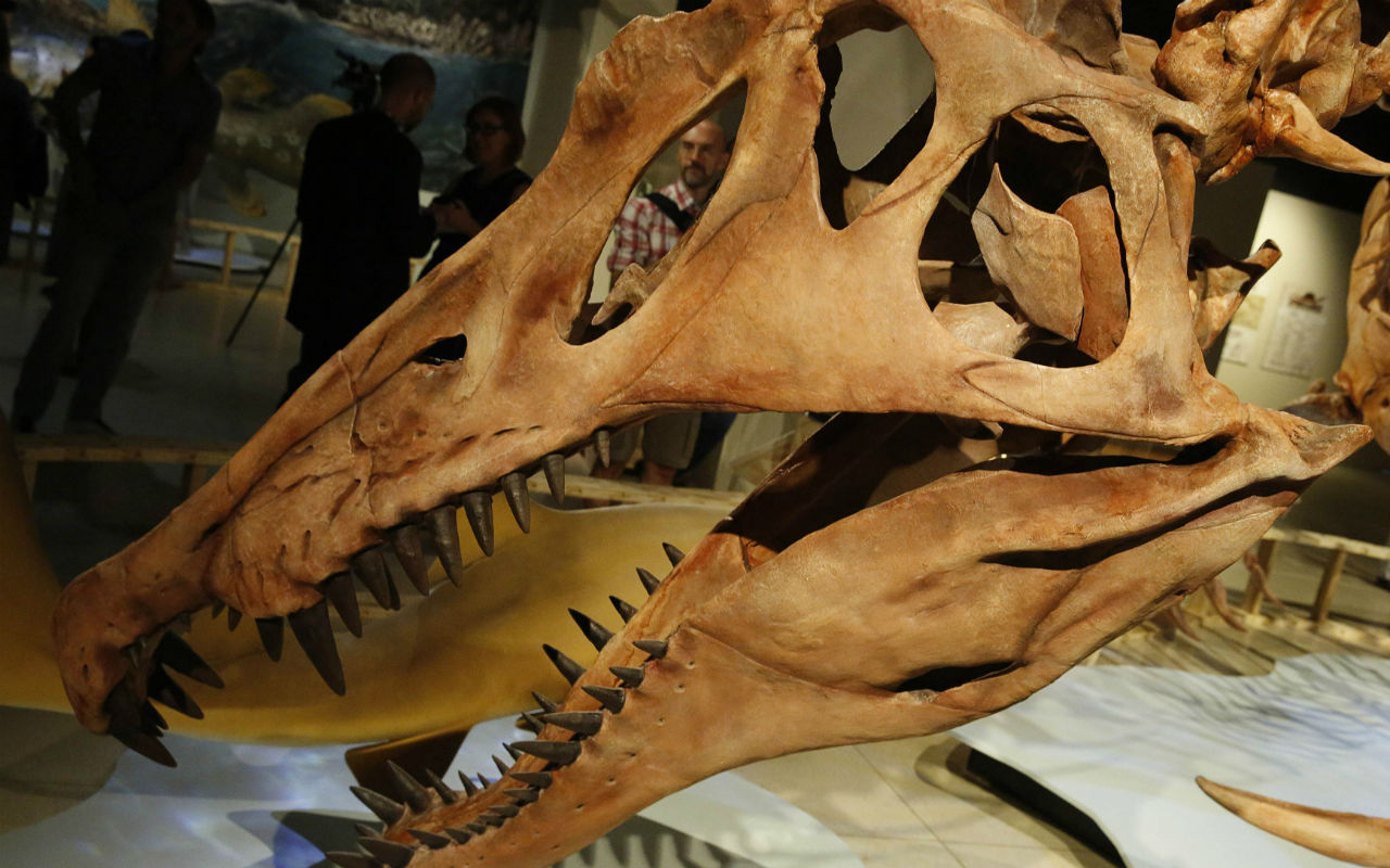 Científicos descubren nuevo dinosaurio en Venezuela