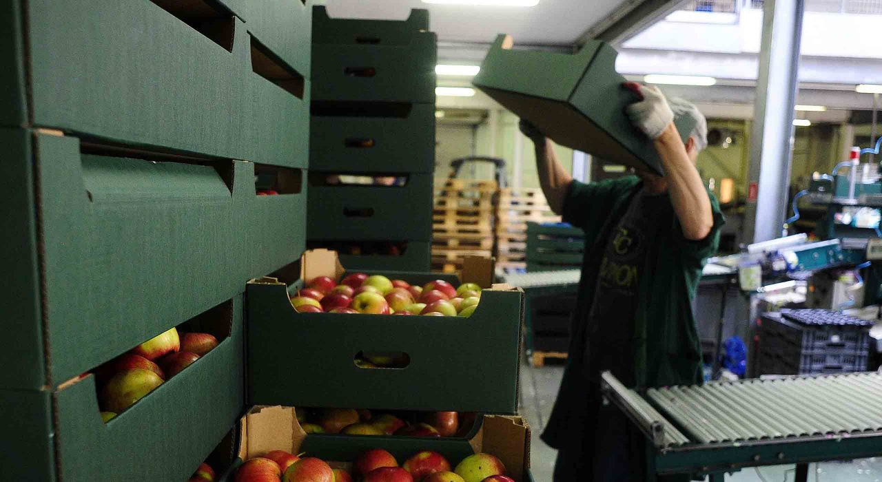 Compradores de Canadá y EU buscan a productores mexicanos