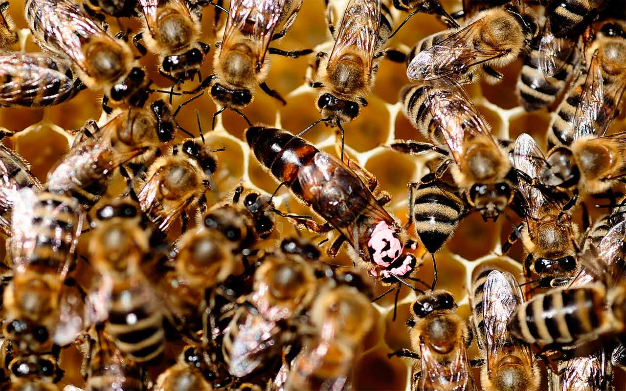 Walmart presentó patente para abejas robot autónomas