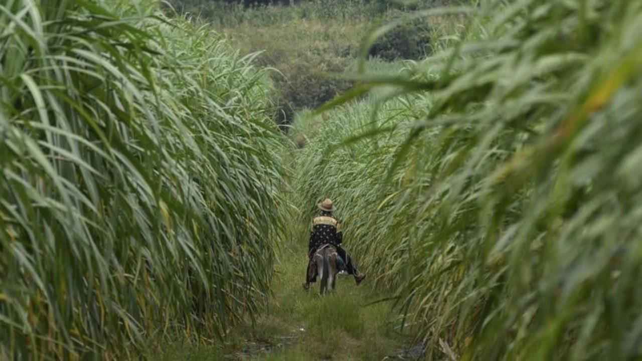China insta a compañías alimentarias aumentar producción ante COVID-19