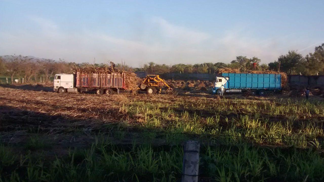 Azucareros mexicanos: era ceder o salir de Estados Unidos