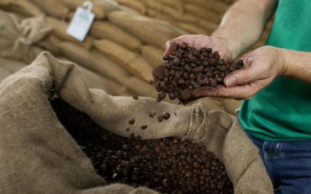 Exportaciones de Honduras a China Taiwán crecen 64%