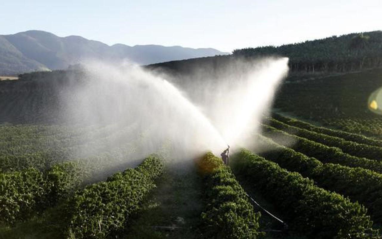 Caída en precios de café pone en jaque a productores mexicanos