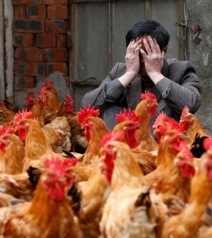 México trabaja para evitar brotes de influenza aviar: Sagarpa