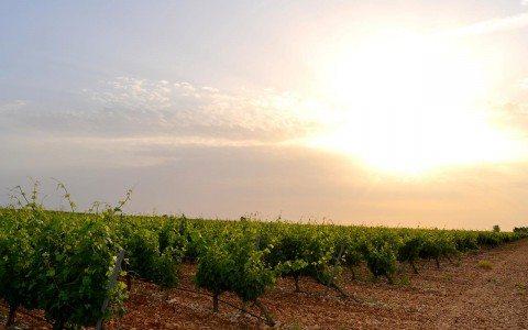 Matarromera va más allá del vino y usa la uva para la salud