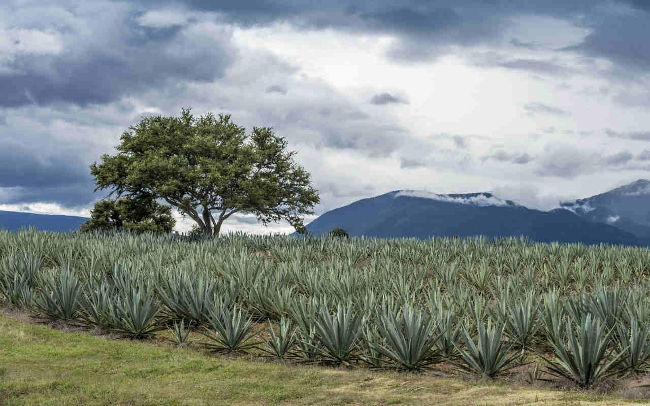 Quién se apunta para reinventar el Tequila Express