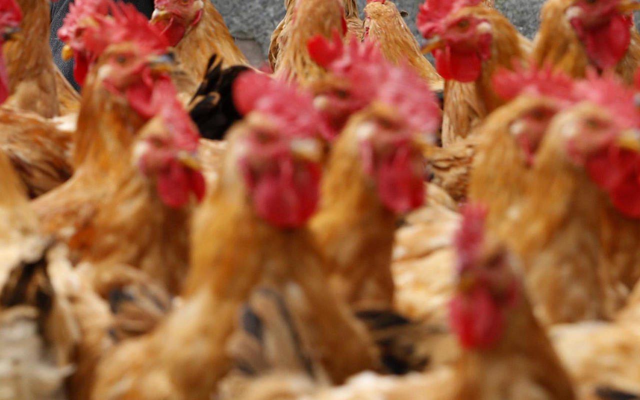 El negocio de salud animal tiene nuevo dueño en México