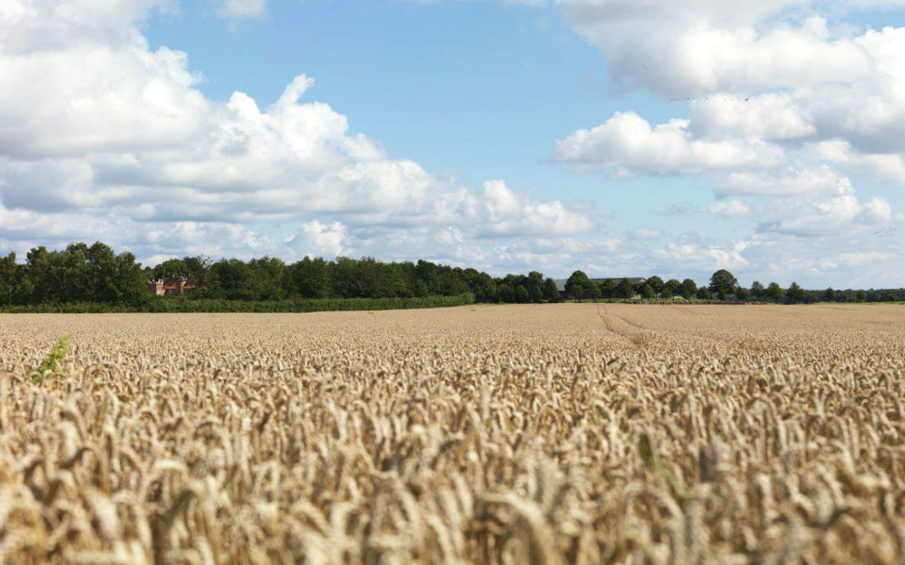México cuadriplica en cinco años importación de trigo ruso