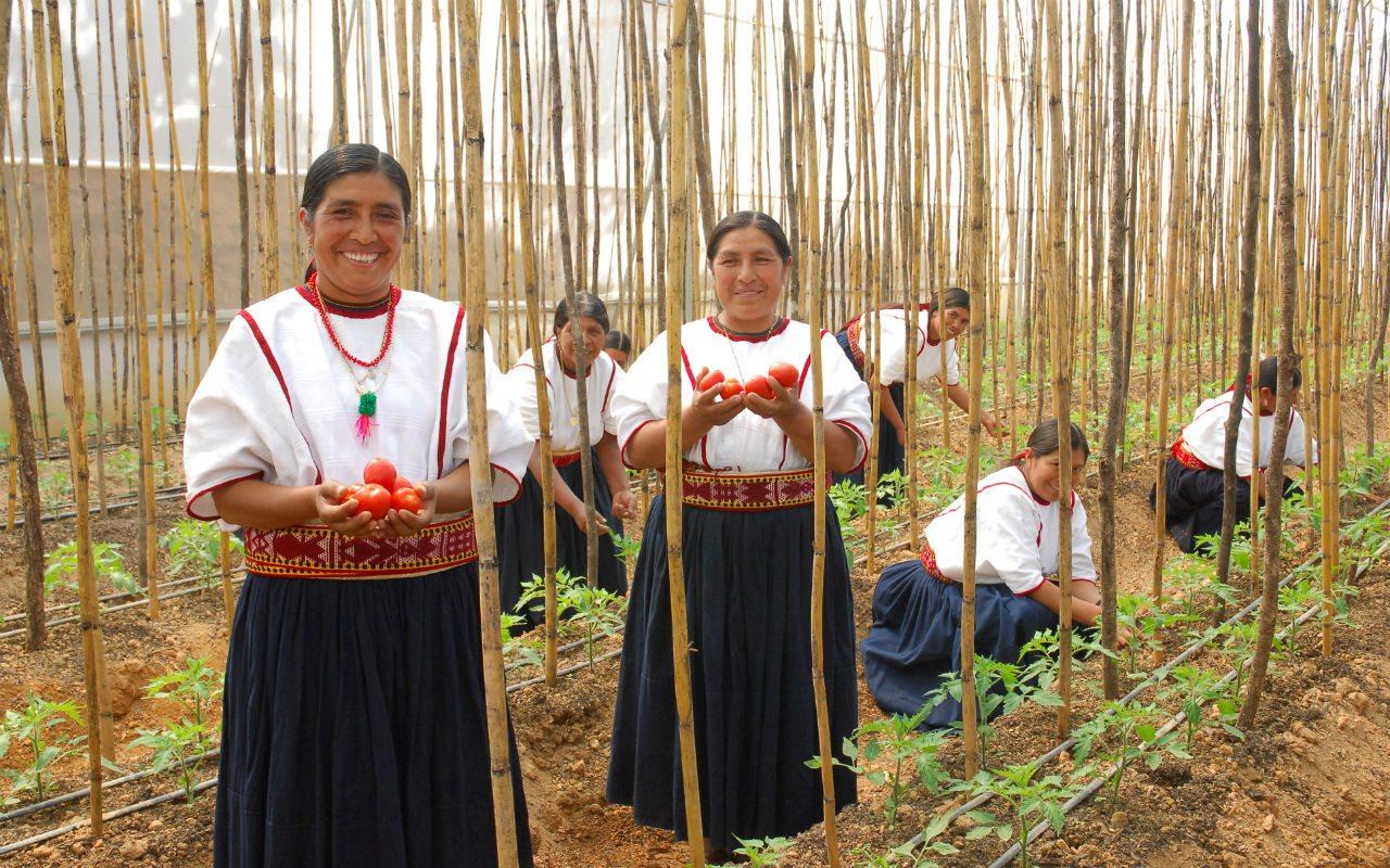 Bonos de impacto social: una oportunidad para México