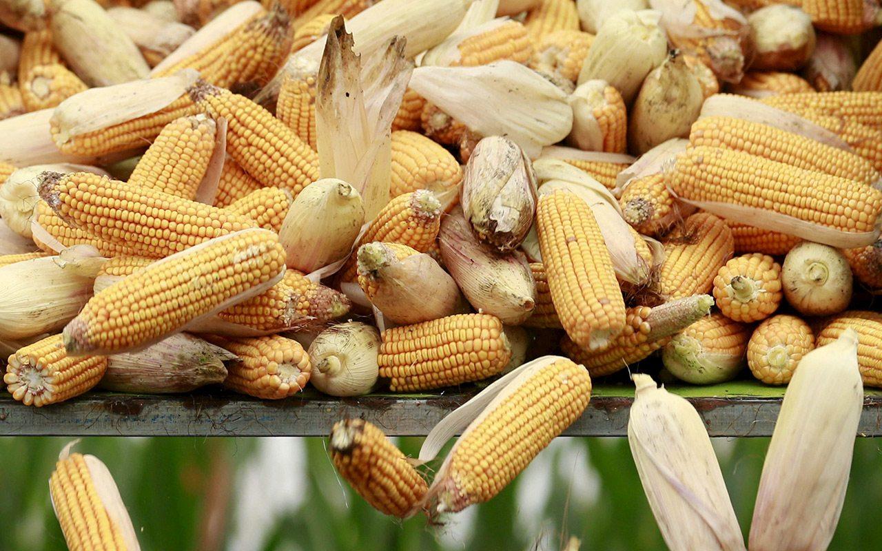 Dan visto bueno a fusión entre Monsanto y Bayer