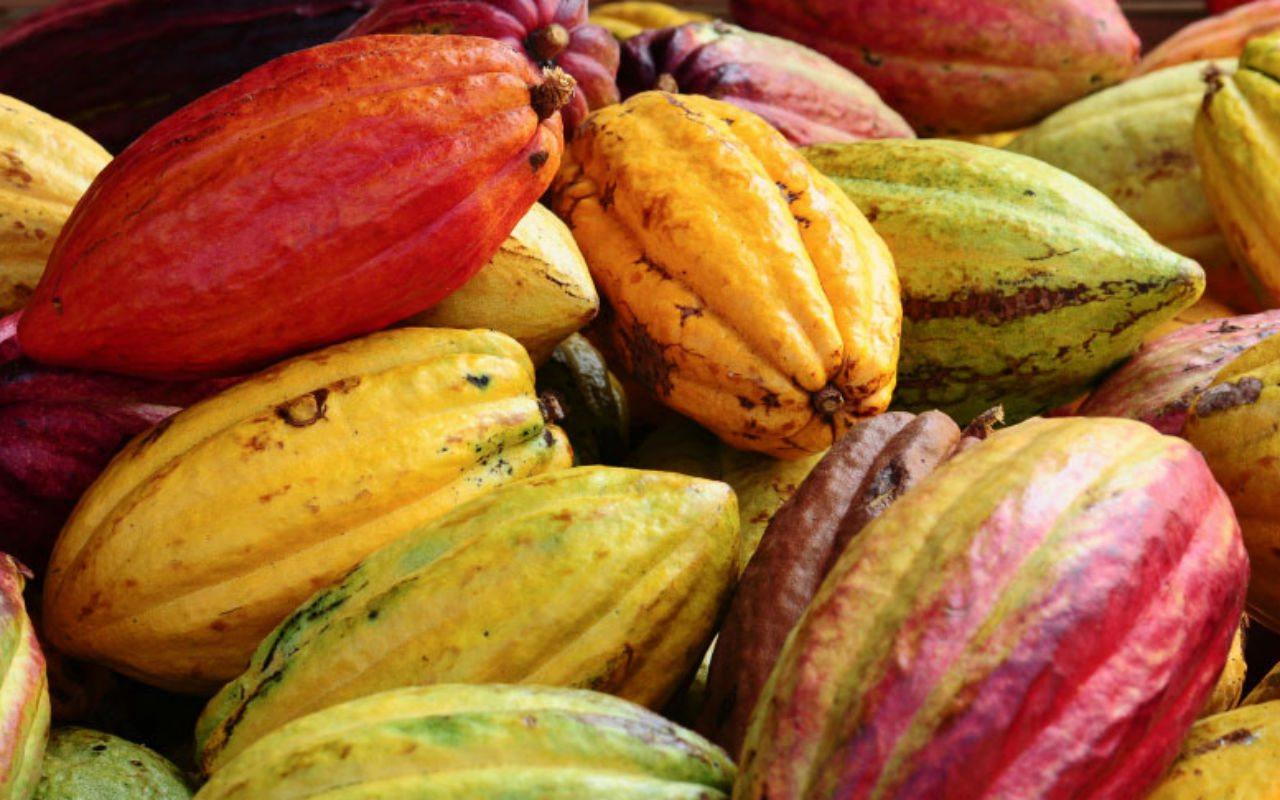 Honduras promoverá tabaco, cacao y café en Perú