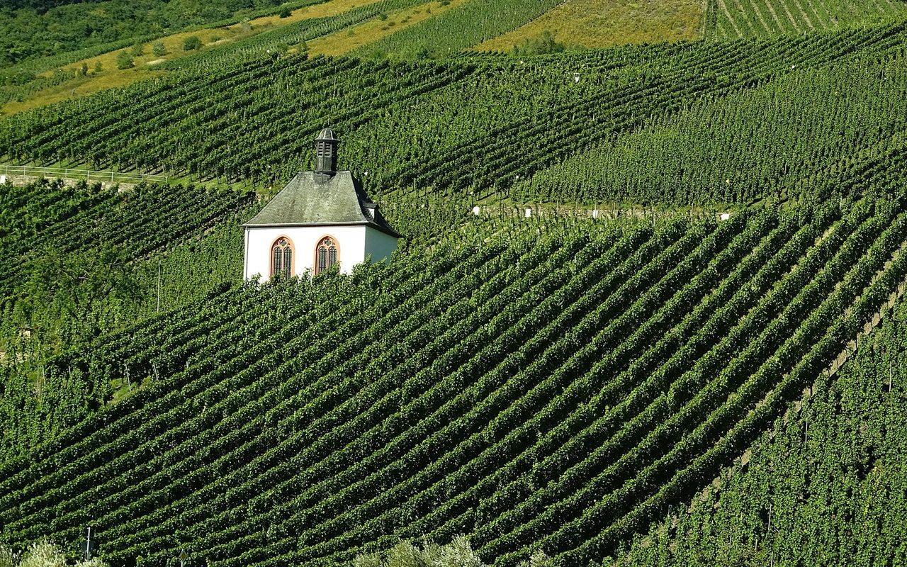 Los mejores viñedos del mundo para tomar unas vacaciones. Parte II