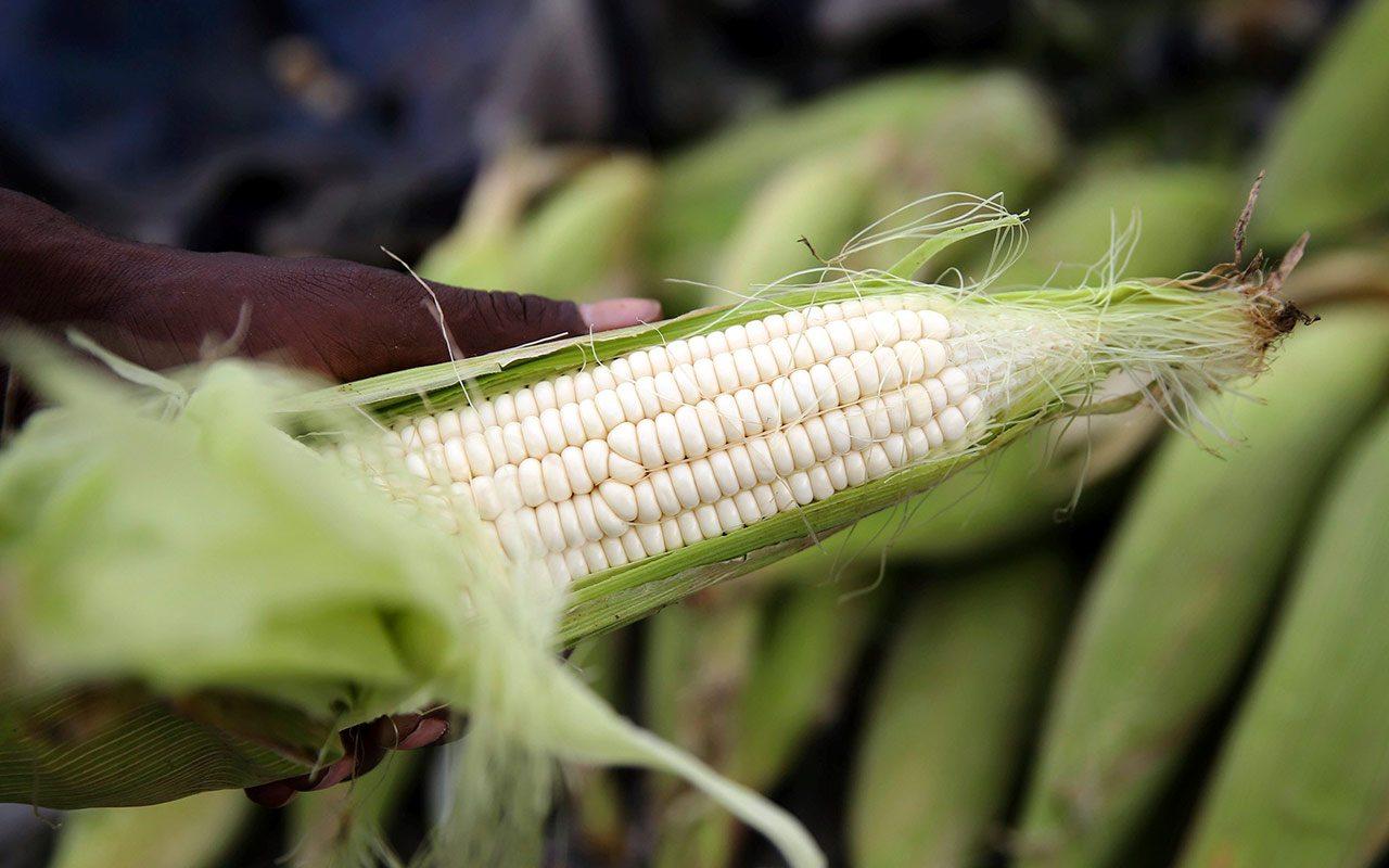 México estudia imponer aranceles a maíz y soja de EU