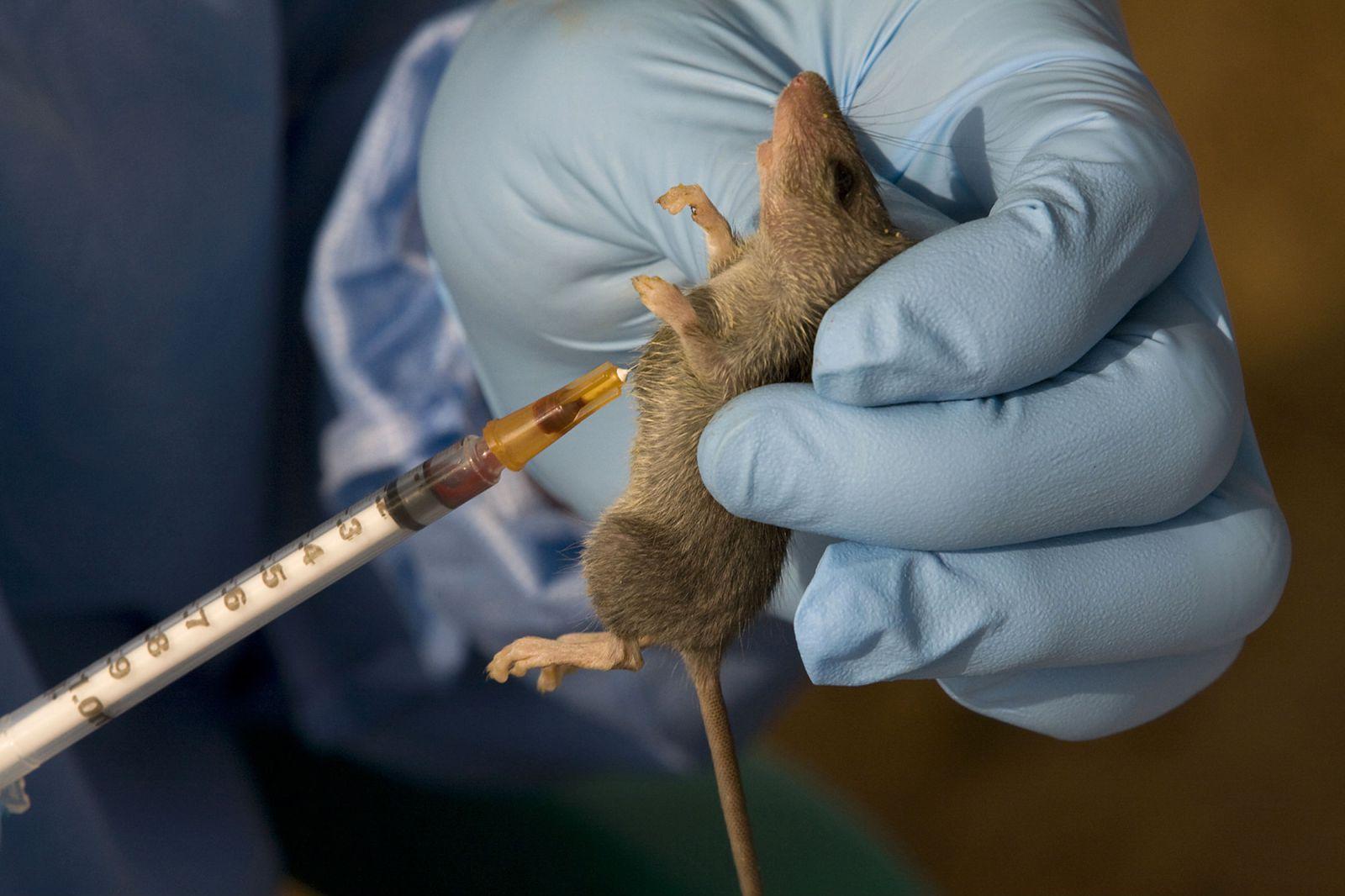 Nuevo virus en Brasil causa la primera muerte por fiebre hemorrágica