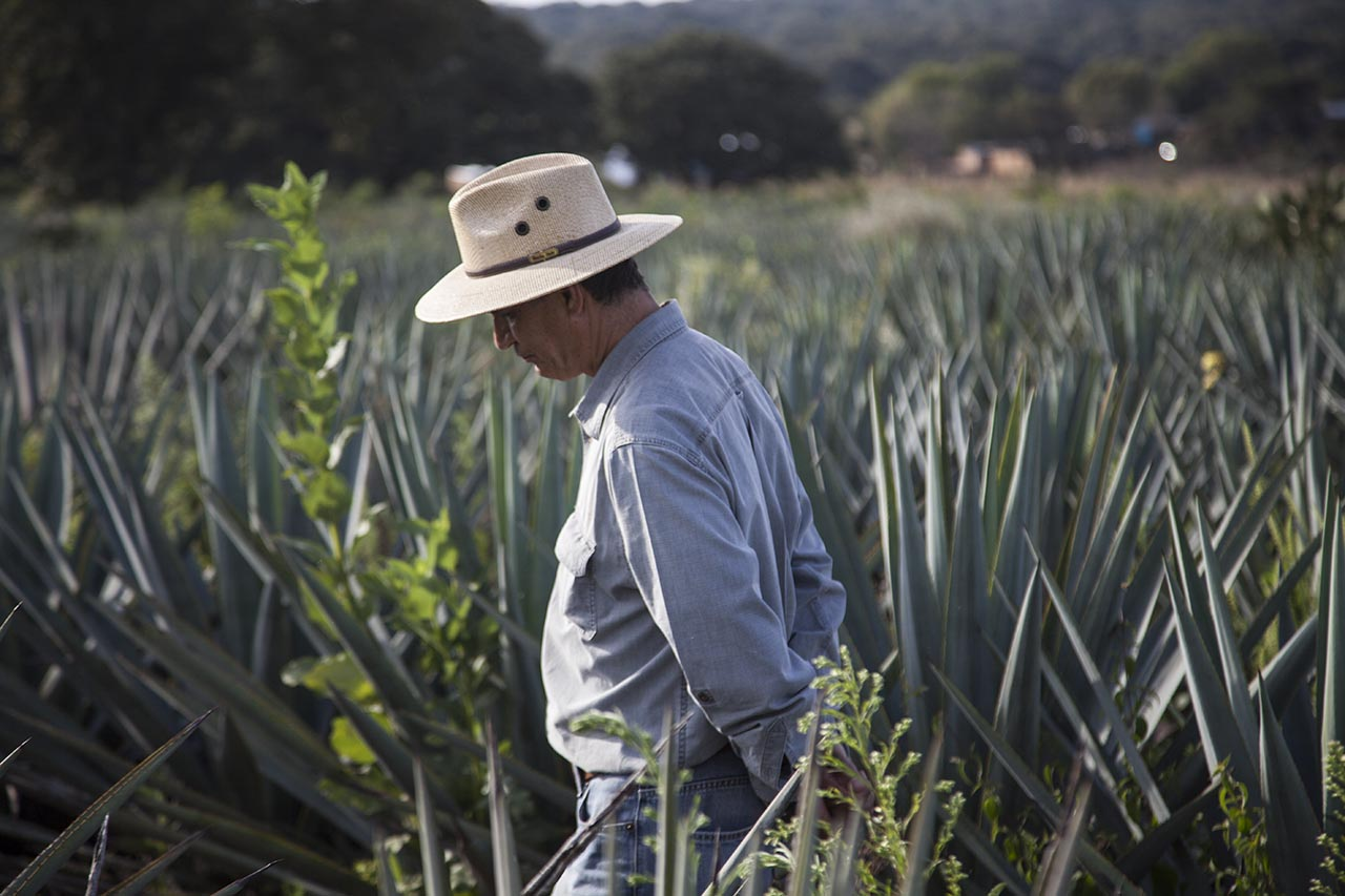 El destino que eleva el Tequila