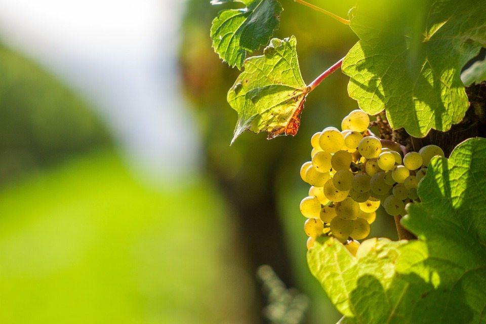 Los vinos que quieren conquistar los paladares mexicanos