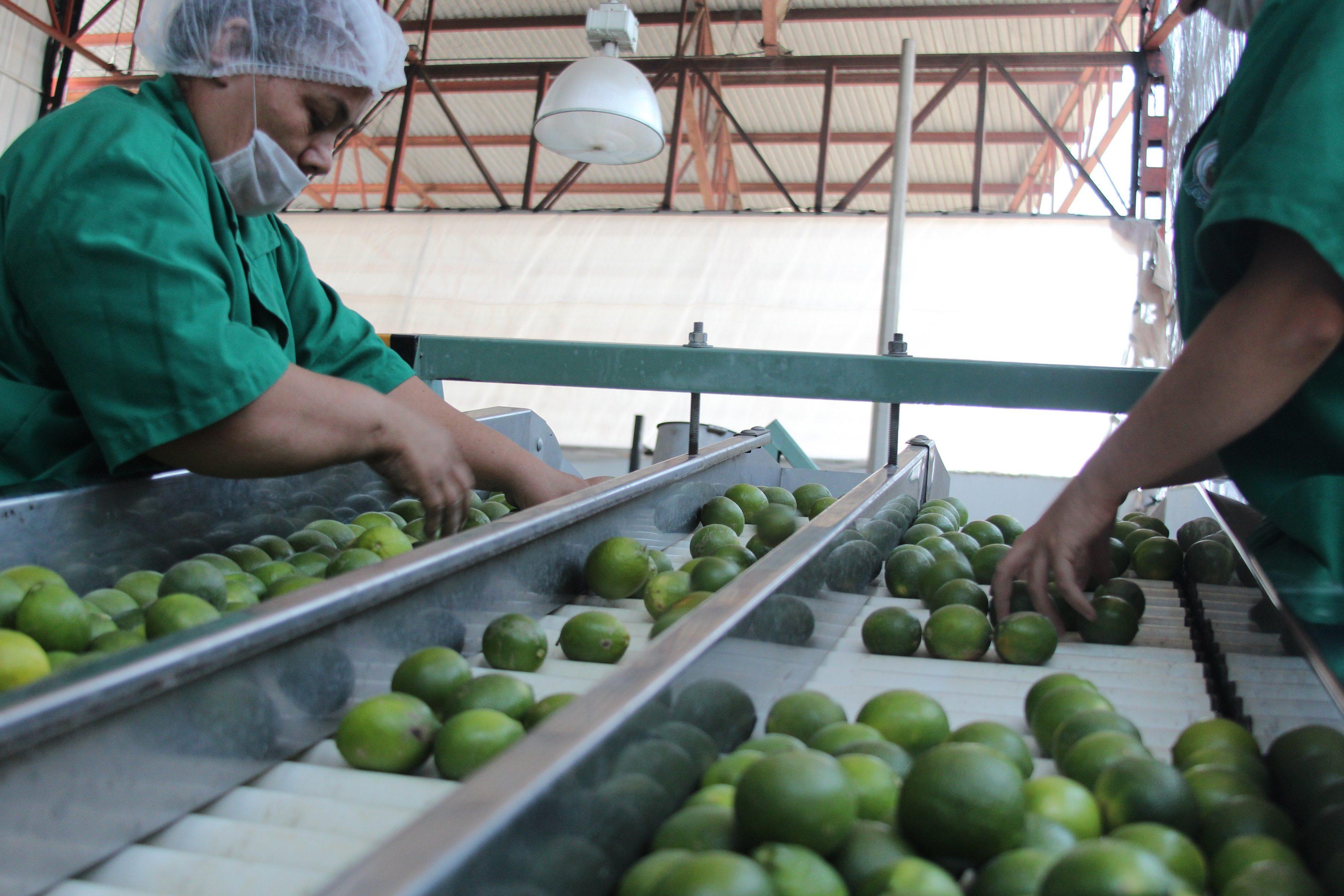 Limón y frijol, los productos que más subieron en la primera quincena de abril
