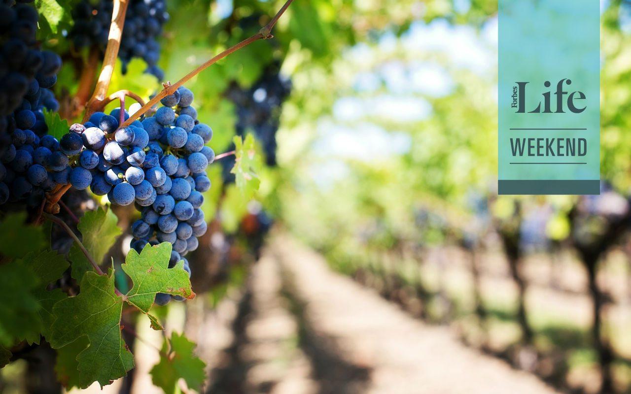 Sudáfrica, ¿una nueva potencia vitivinícola?