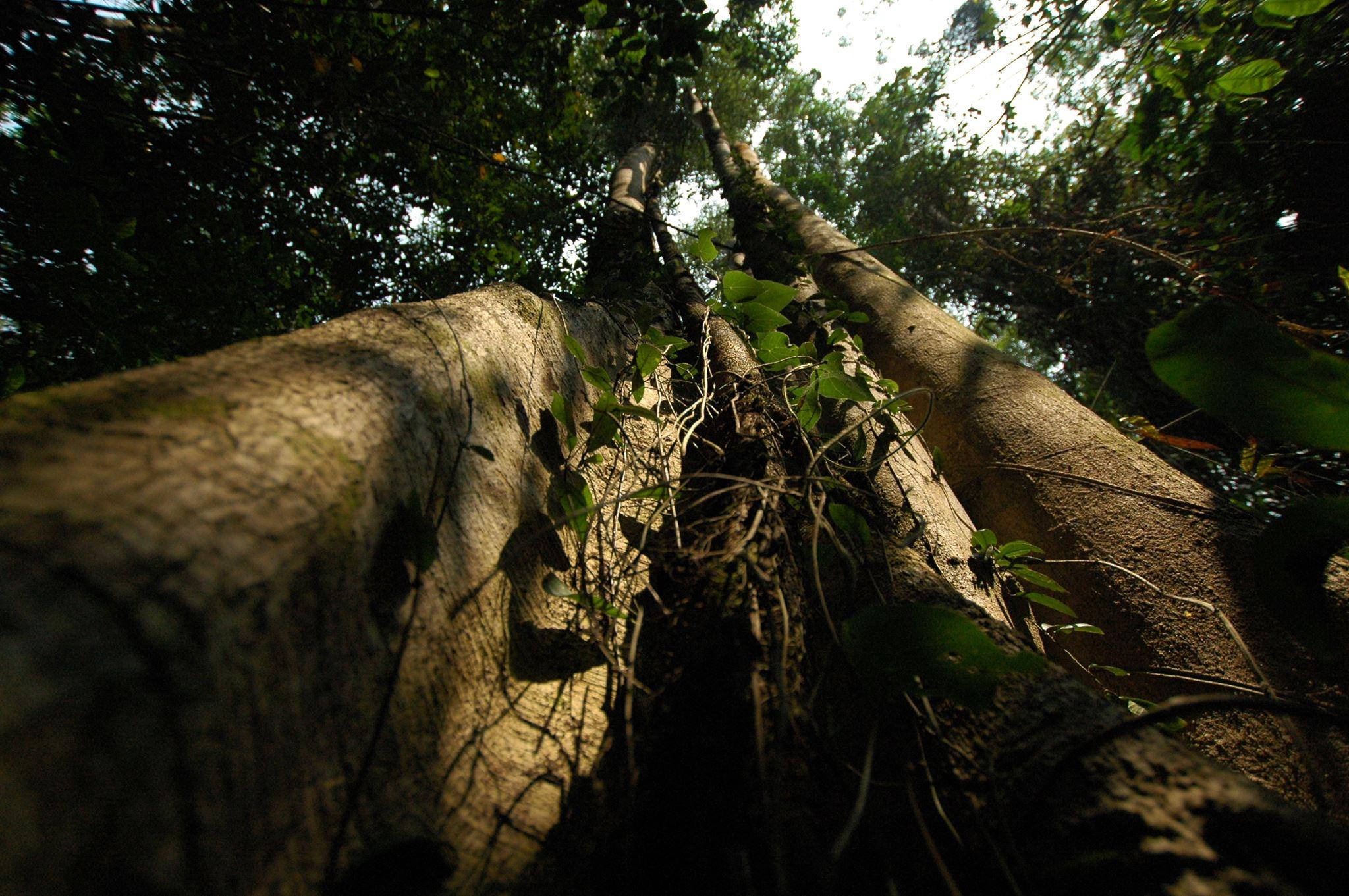 México ha ido recuperando sus bosques: especialista de la UNAM