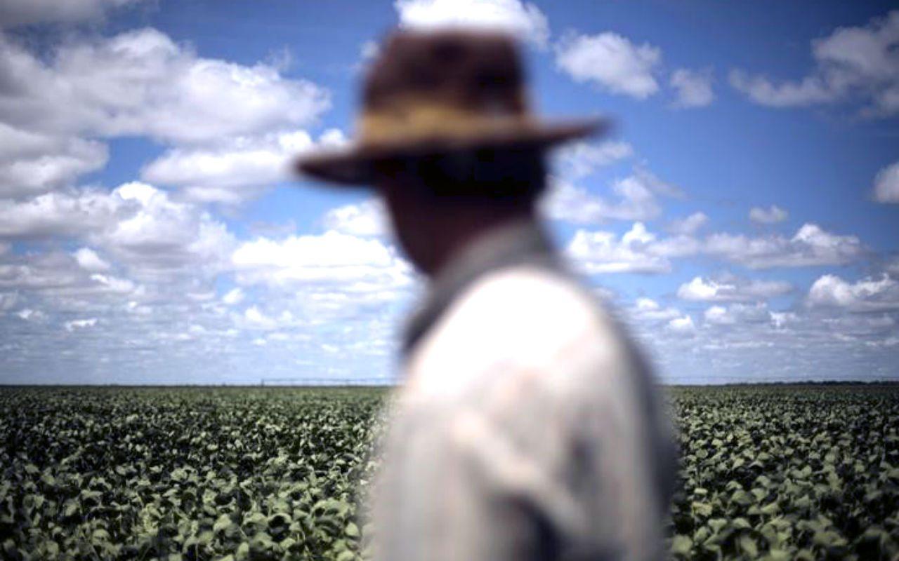 Exportaciones agrícolas en Nicaragua caen 8% en 2018