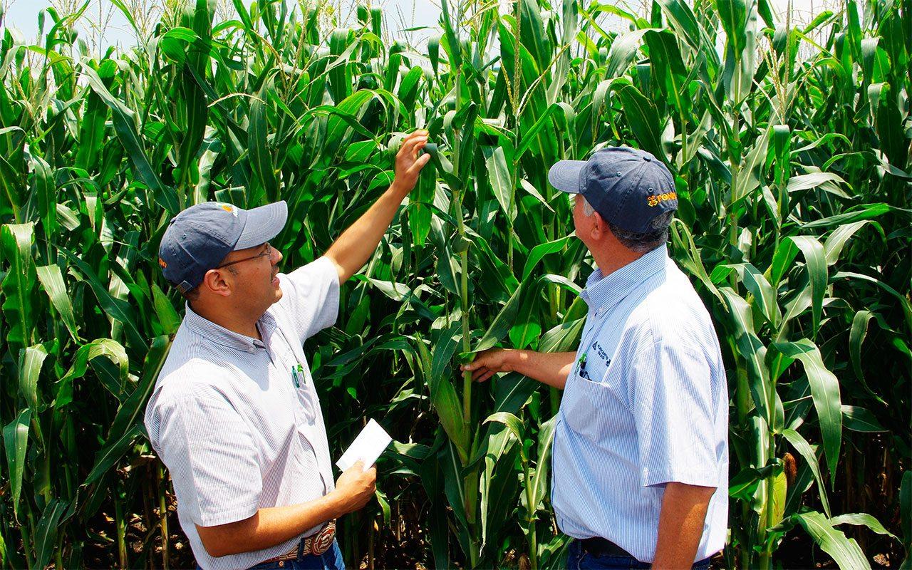 Bayer tiene 84,000 mdd para ofrecer por Monsanto