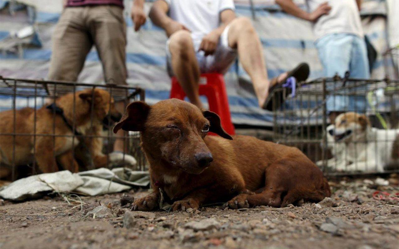 5 cosas que debes saber sobre el festival chino de la carne de perro