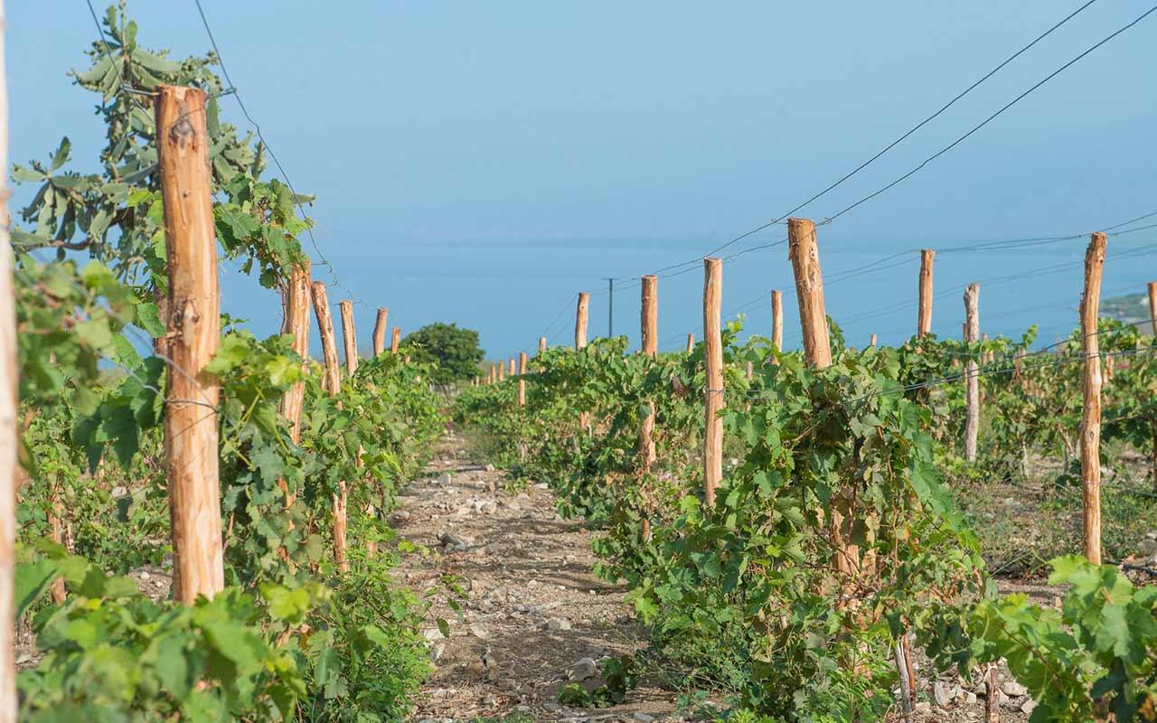 El Caribe, ¿una nueva potencia en vinos?