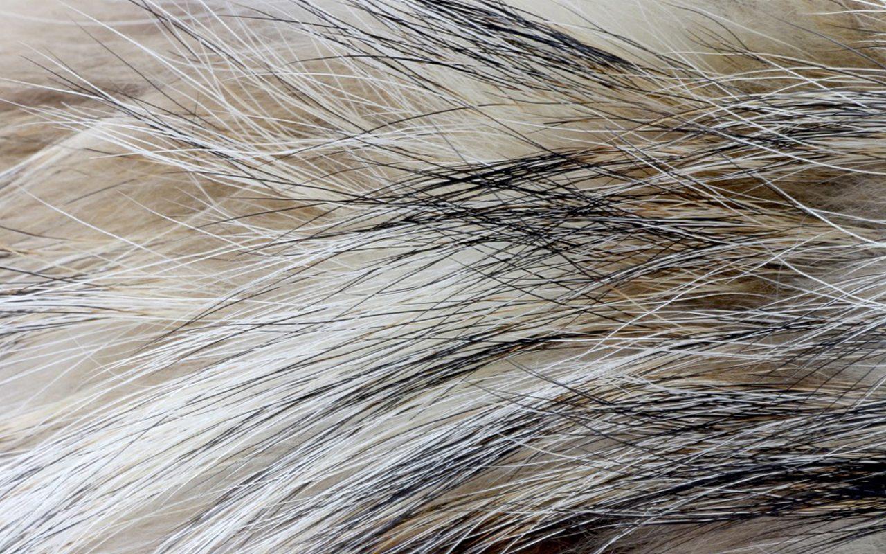 El constante choque entre la ecología y la industria peletera