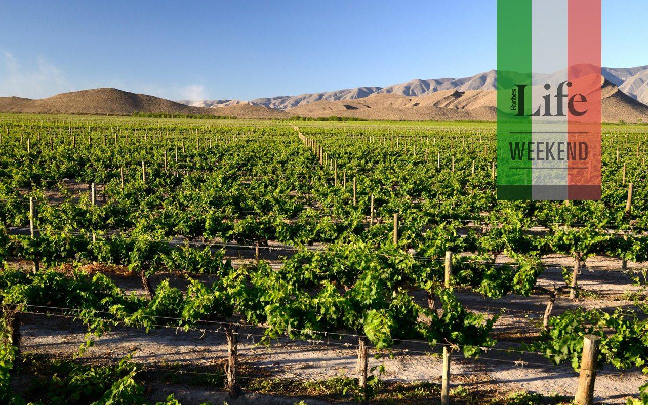 Viajes para conocer al vino mexicano más allá de la copa