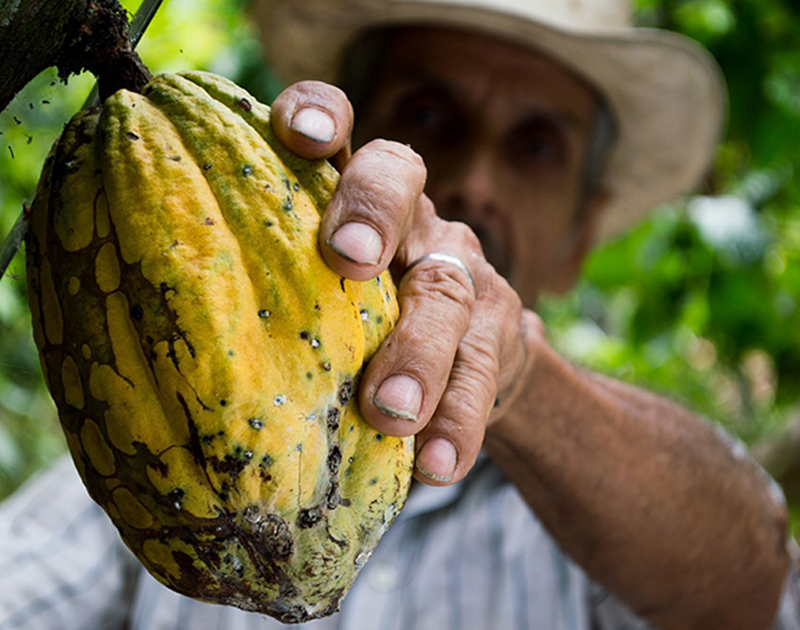 Corea capacita a productores de cacao de AL y el Caribe
