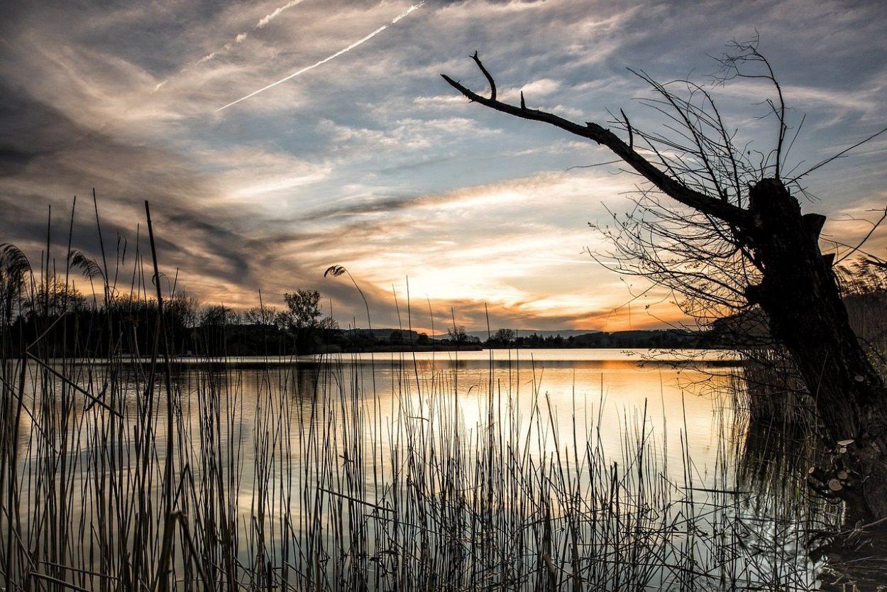 Ecoosfera, el portal que te ayuda a respetar al medioambiente