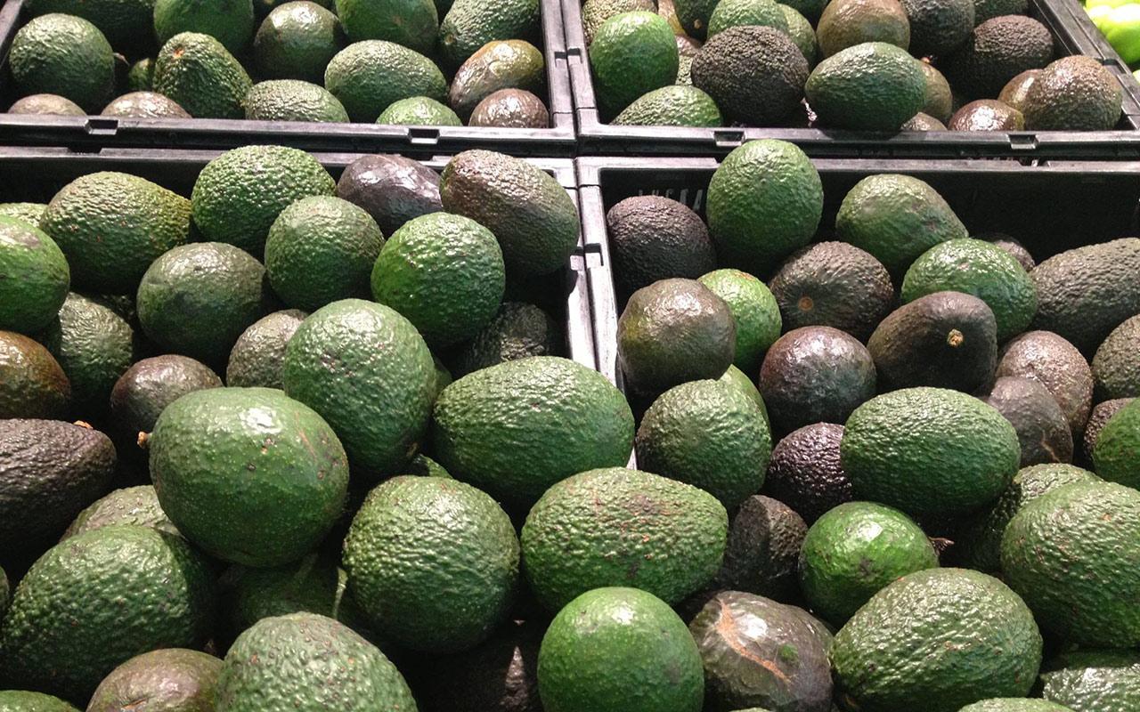 Con precios de 134 pesos por kilo, productores de aguacate pierden 4,000 mdp