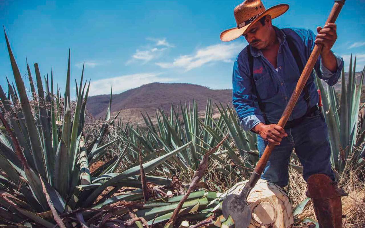 La Historia De Don Julio 70 El Tequila Que Lo Cambio Todo Forbes