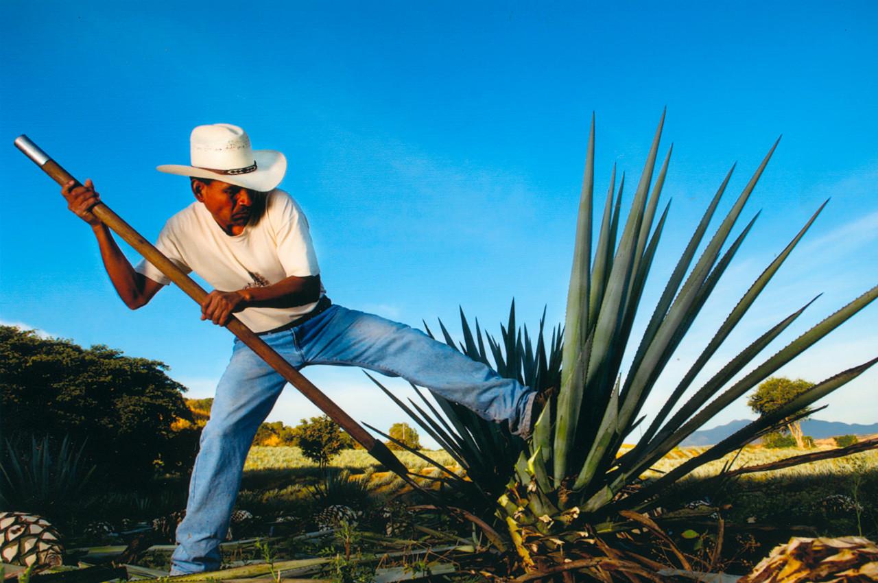 Una década de la Ruta del Tequila