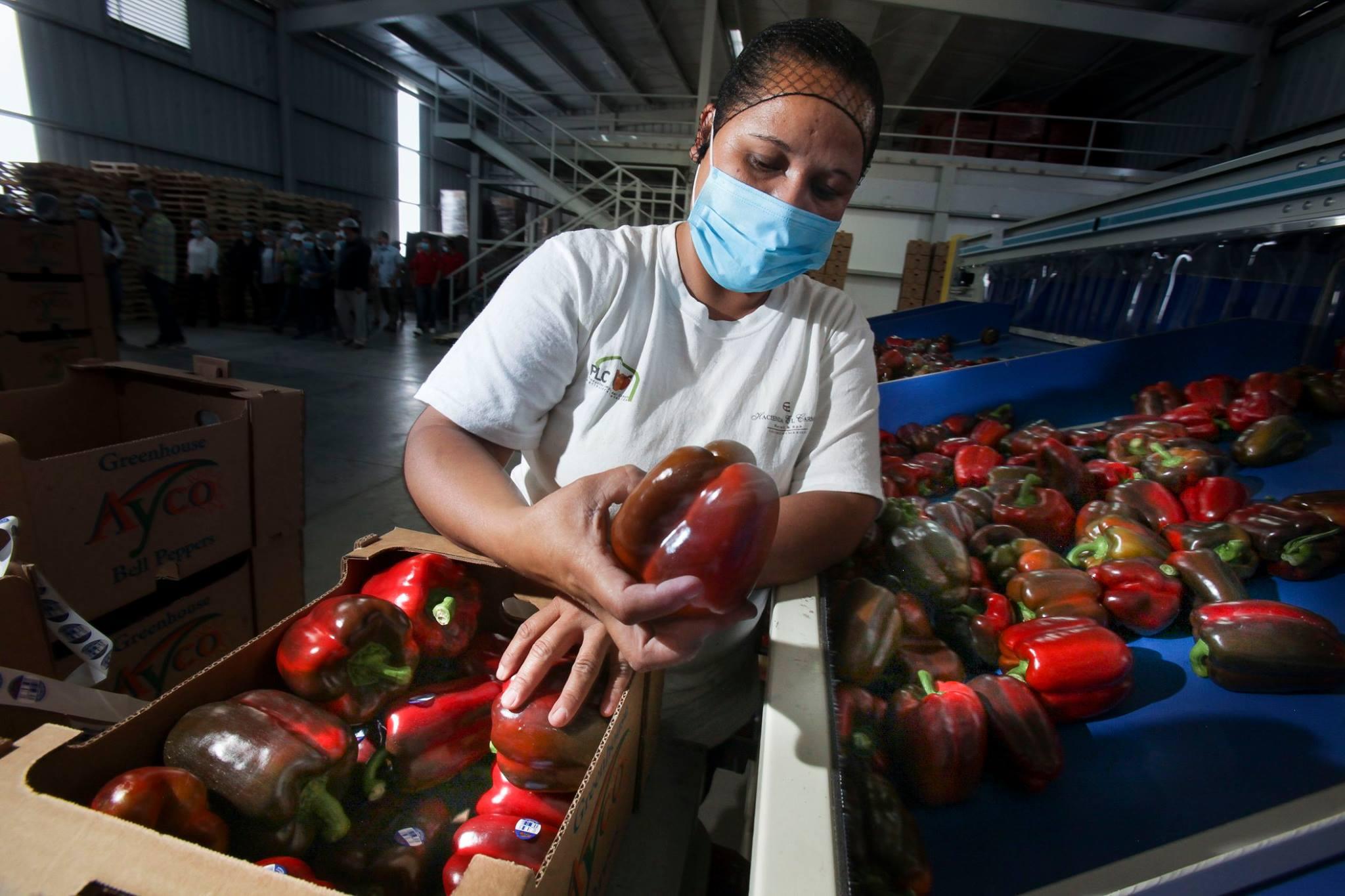 Mensaje para Trump: México le seguirá dando de comer a Estados Unidos