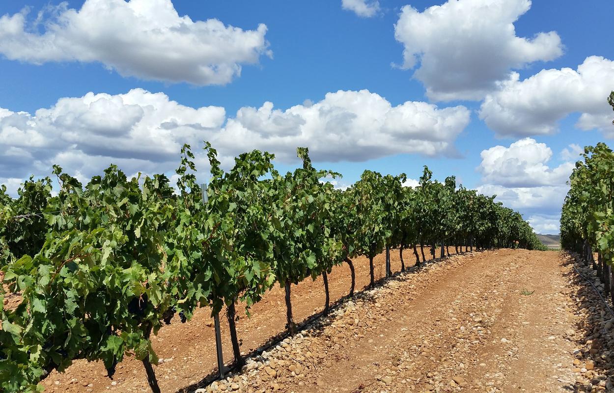 Las regiones vitivinícolas de España que hacen a sus vinos destacar