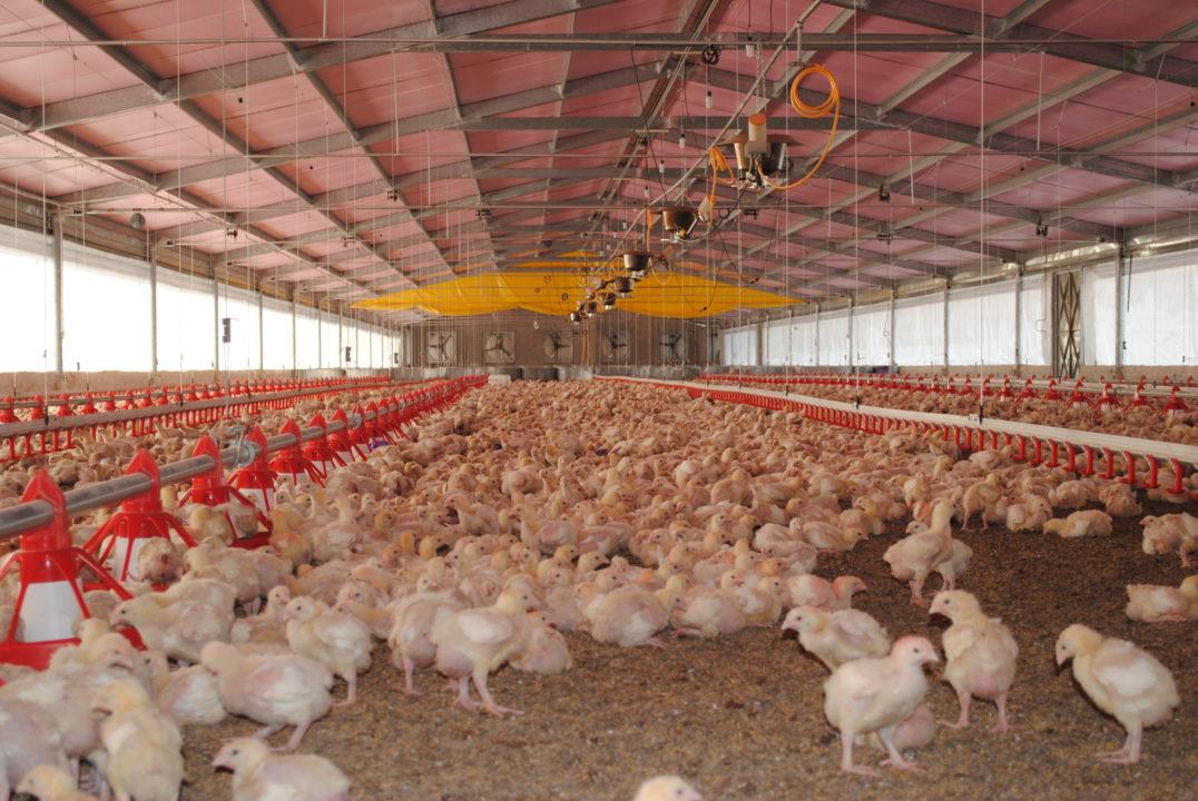 México suspende importación de carne de pollo brasileña