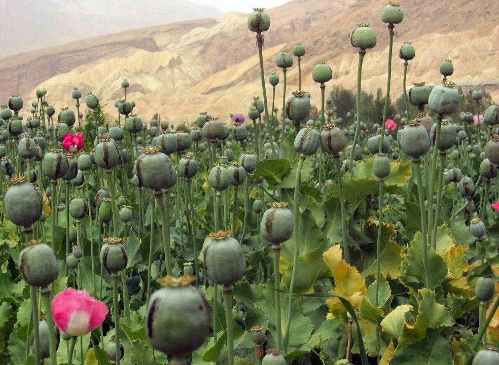 Estados Unidos ofrece financiamiento contra la heroína en México
