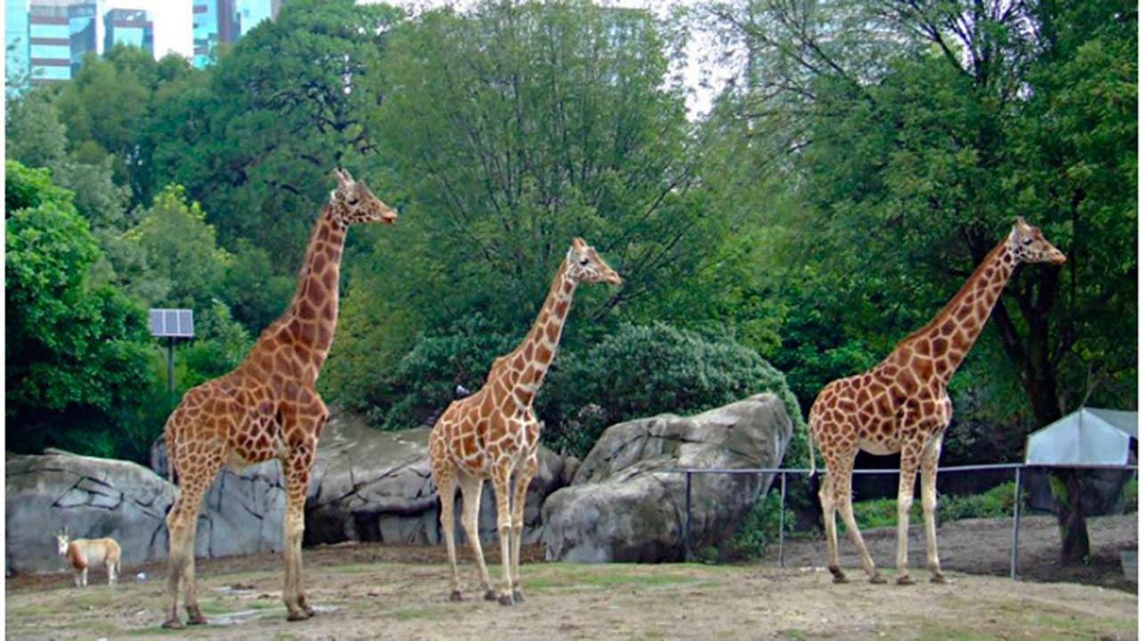 La morfología de las jirafas y los negocios