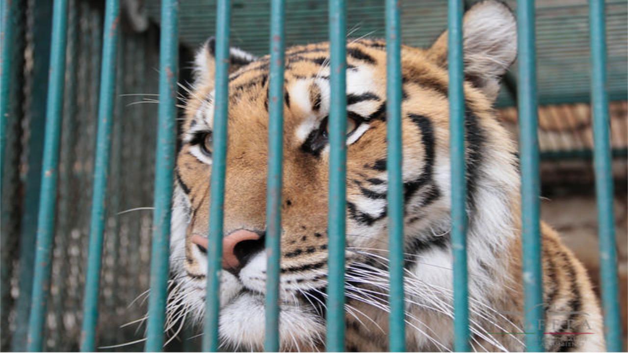 Tráfico animal: un negocio millonario que crece en México