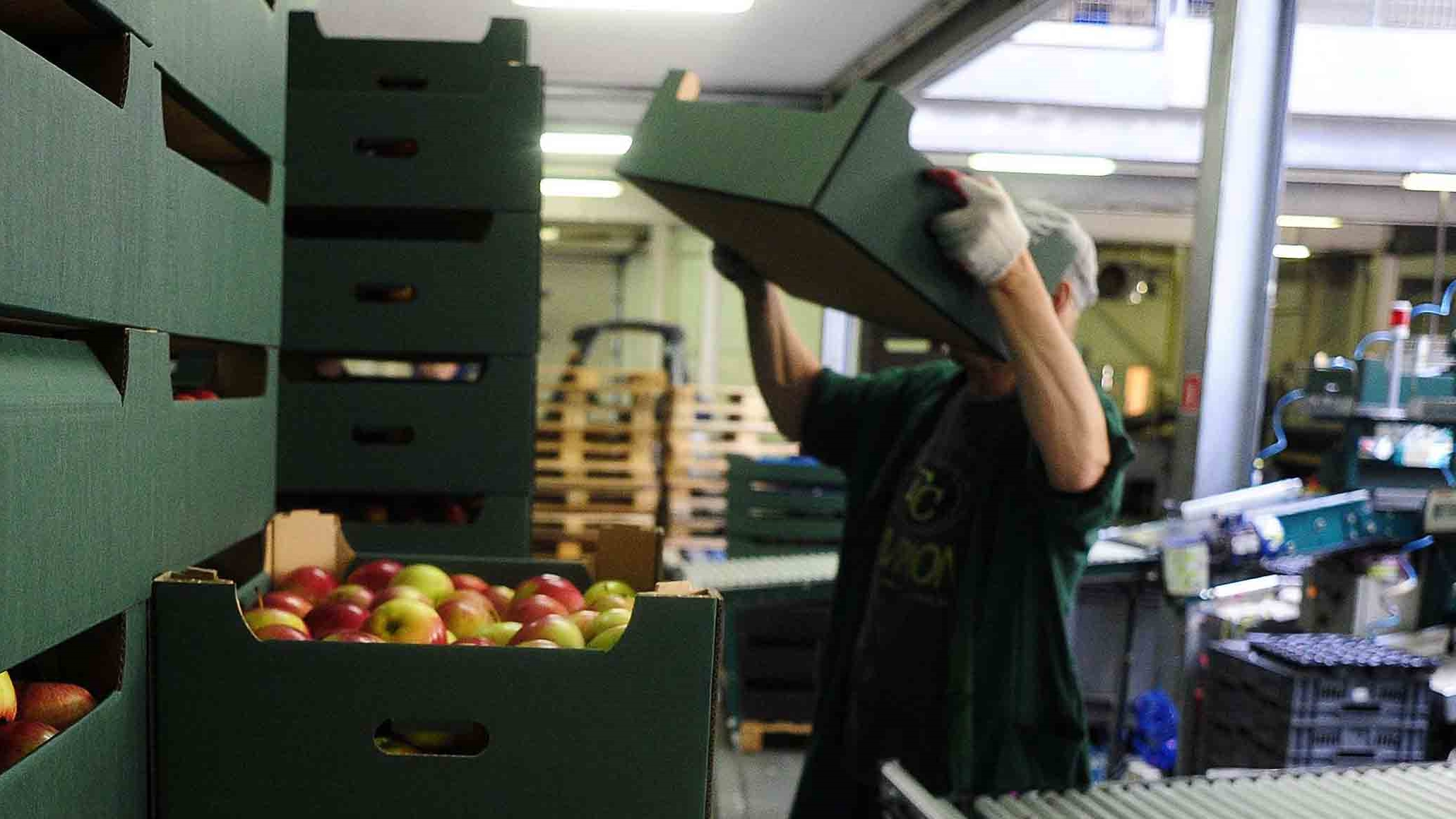 Desempleo e informalidad bajan ligeramente en febrero