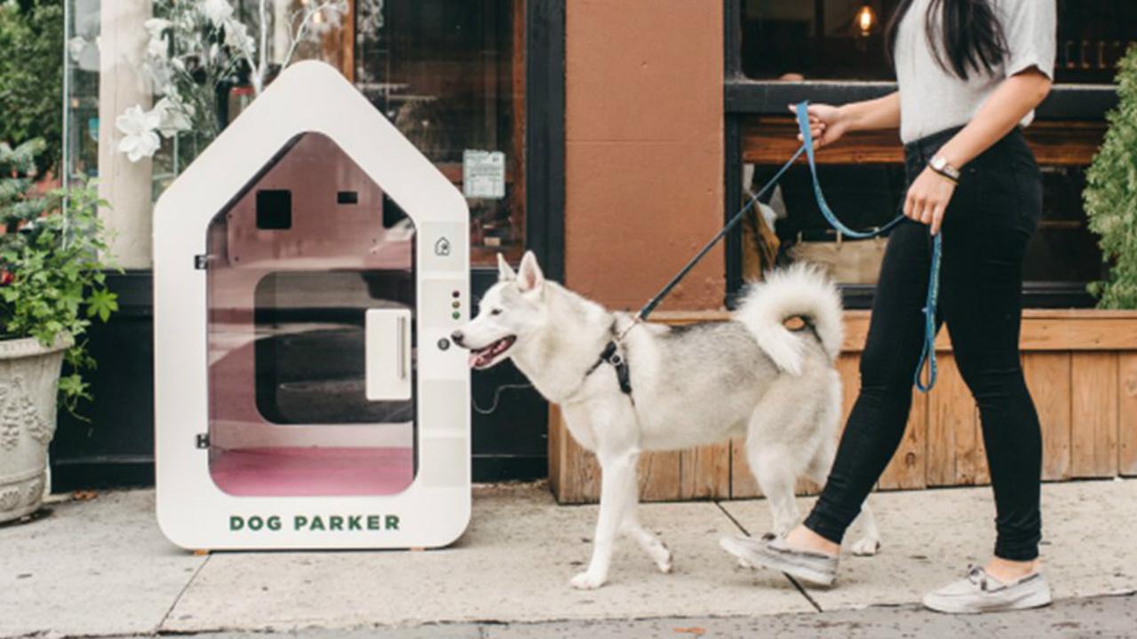Marketing de mascotas un nicho muy lucrativo