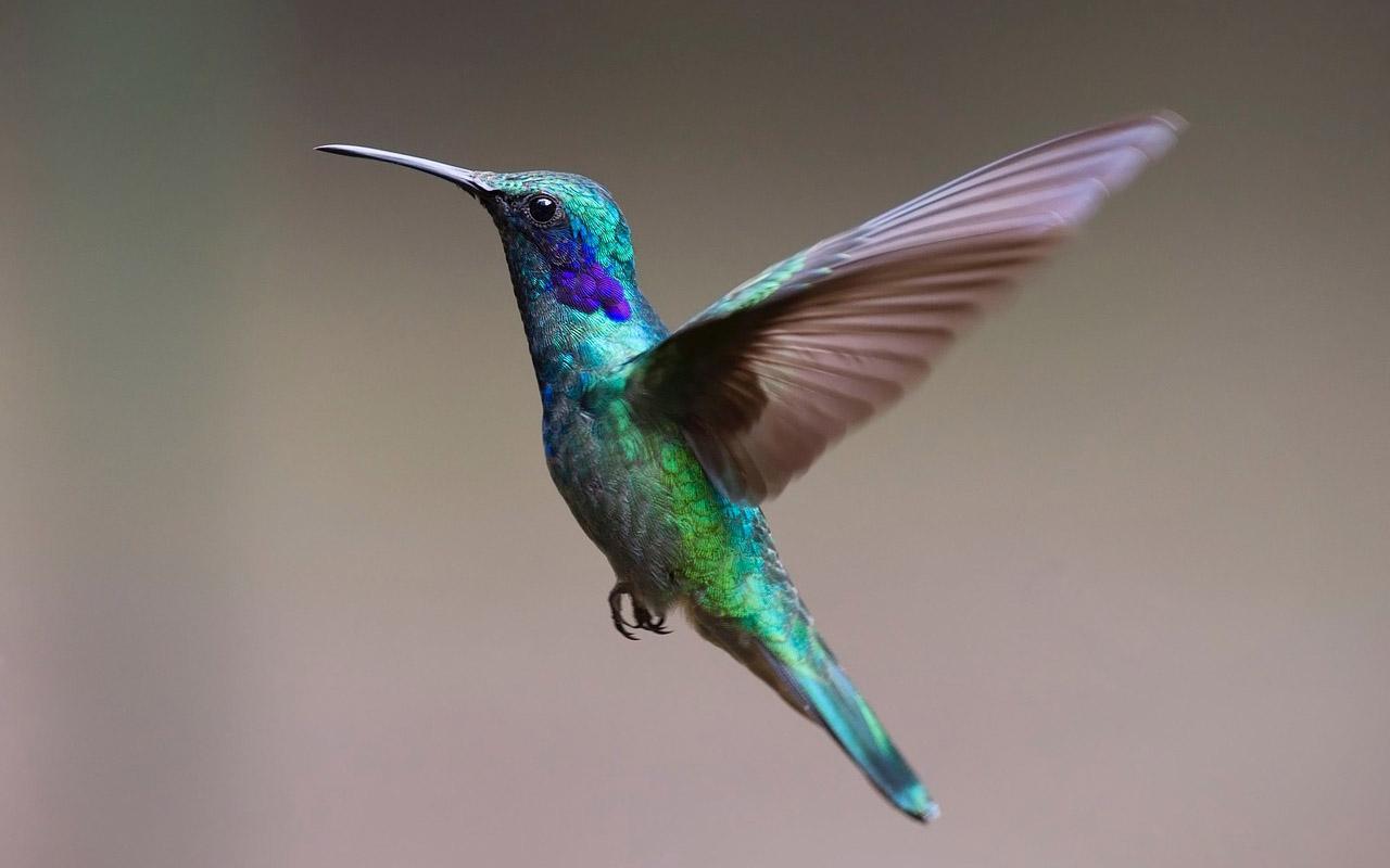 Avistamiento de aves, la nueva forma de viajar