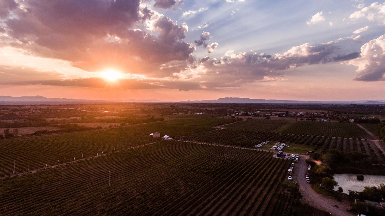 Guanajuato es el destino emergente del vino mexicano
