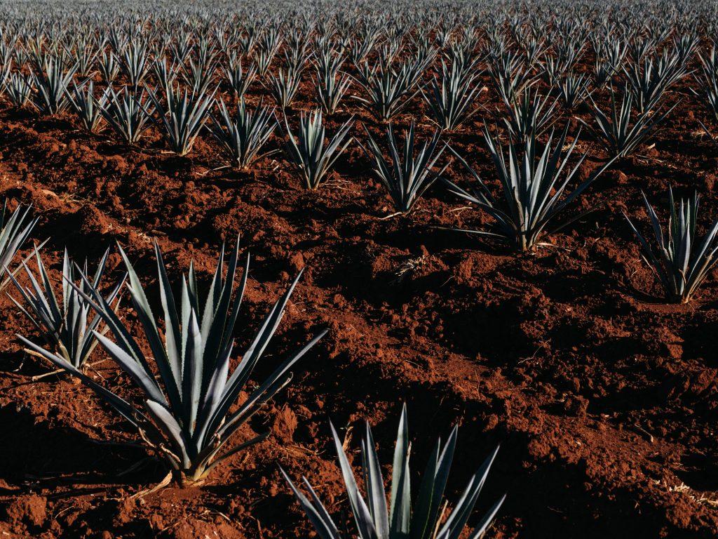 tequila guia de cata fiestas patrias 2